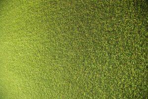 דשא סינטטי באתר וידר